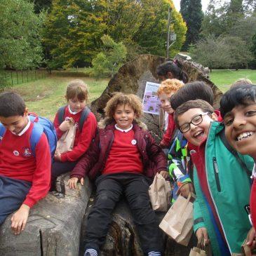 Cherry Class – Harcourt Arboretum – Autumn 2018